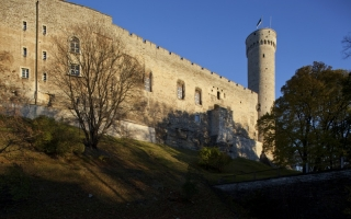 Западное стена замка Тоомпеа и  Длинный Герман, 2013. Фото: Пауль Куймет