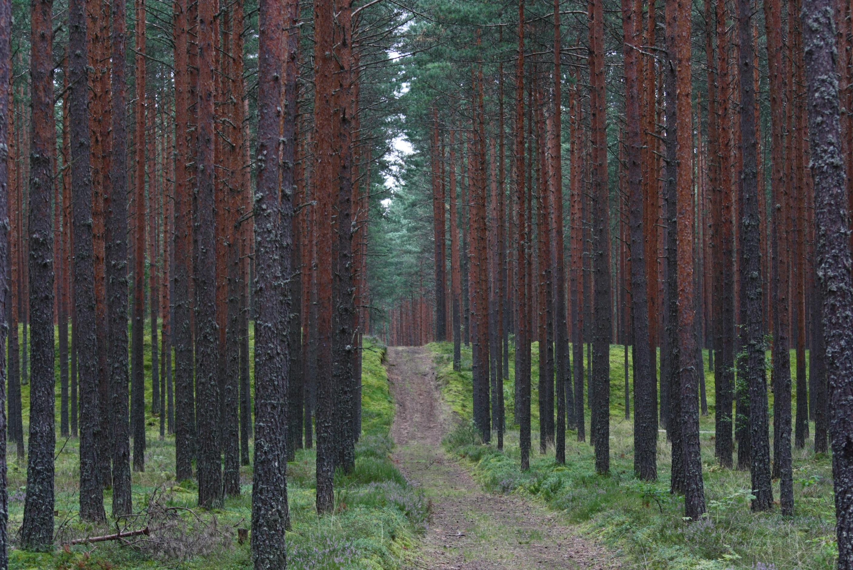 Keskkonnakomisjon arutab Aegviidus metsade jätkusuutlikku arendamist