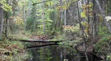 Puhatu looduskaitseala Liguski sihtkaitsevöönd Ida-Virumaal Illuka vallas Puhatu külas. Wikimedia Commons. Maris Juuse