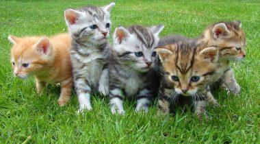 Котята (Фото: pixabay)