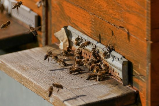 Riigikogu liikmed moodustasid mesinike toetusrühma. Foto: Pixabay