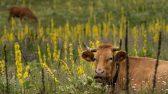 Maaelukomisjon: Eestil piima hind ei tohi jääda alla naabritele. Foto: Pixabay
