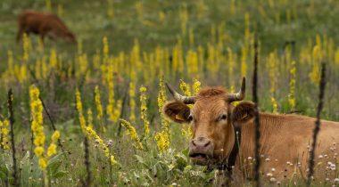 Maaelukomisjon sai ülevaate põllumeestele eraldatavast lisarahast. Foto: Pixabay